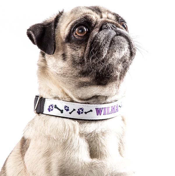 Hundehalsband klein