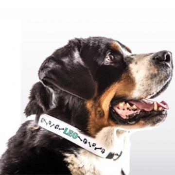 Hundehalsband groß